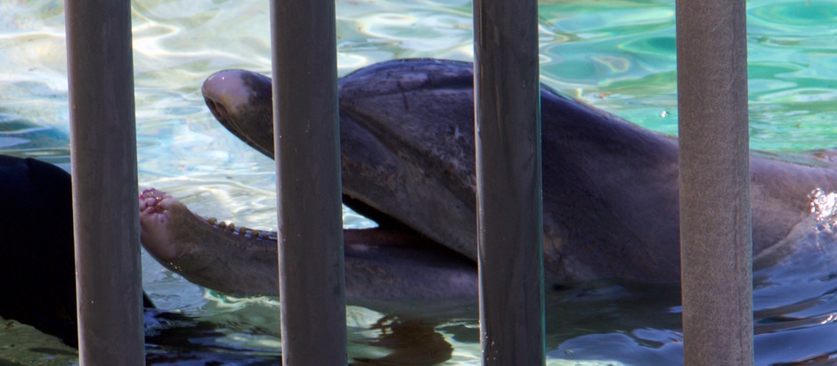 Kamoana's Death Marks 140 Dolphins That Have Died in Sea Life Park's Care