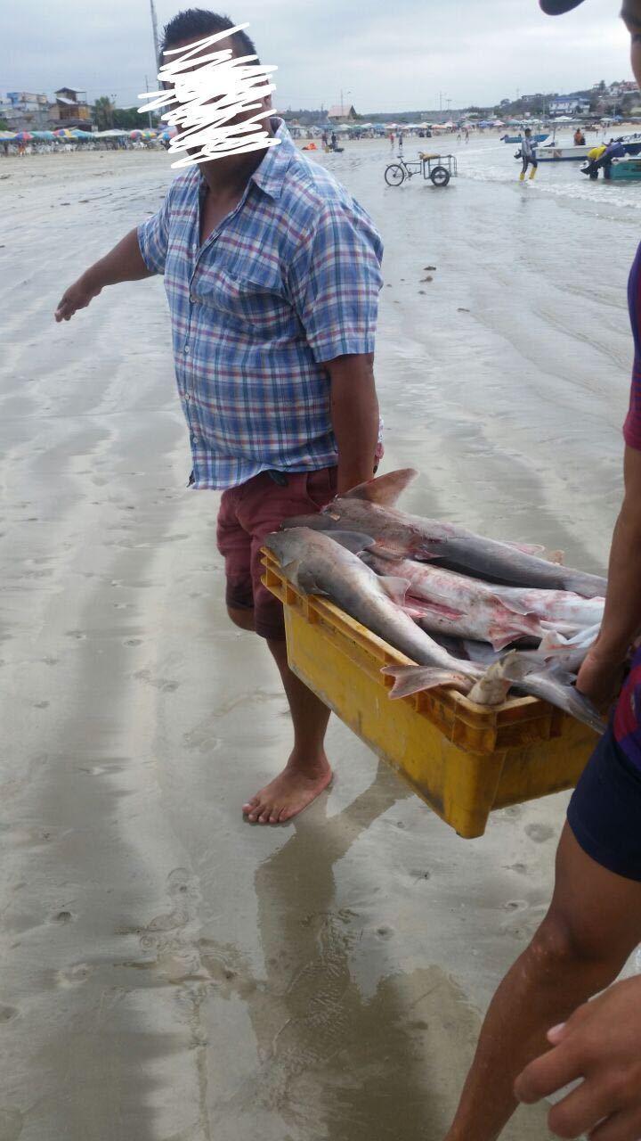 sharking fishing ecuador