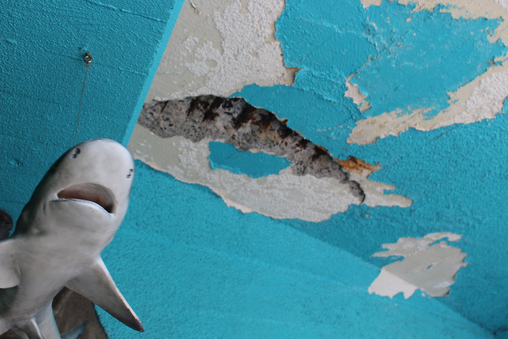 Sea Life Park Falling Apart Dangerous Animal Cruelty