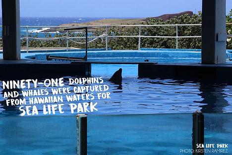 Sea Life Park Dolphin Captures