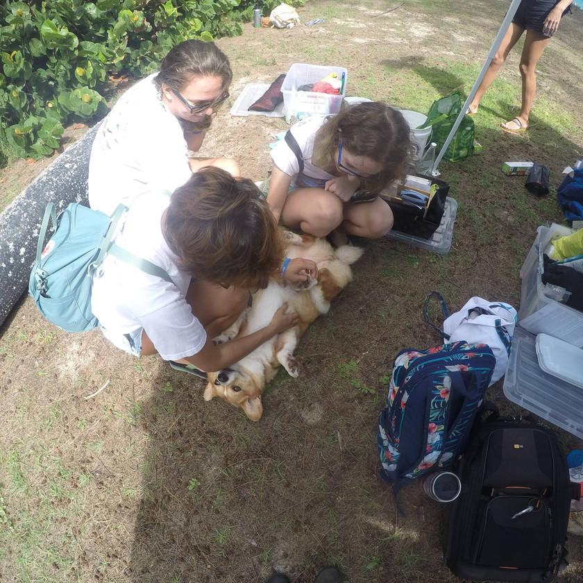 Rooney The Giant Hamster Dog #NerdsAgainstNurdles Waimanalo Beach Clean Up Keiko Conservation One Ocean Conservation