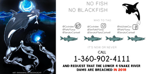 No Fish No Blackfish Southern Resident Orcas Swimming In Moonlight Keiko Conservation PNW Protectors
