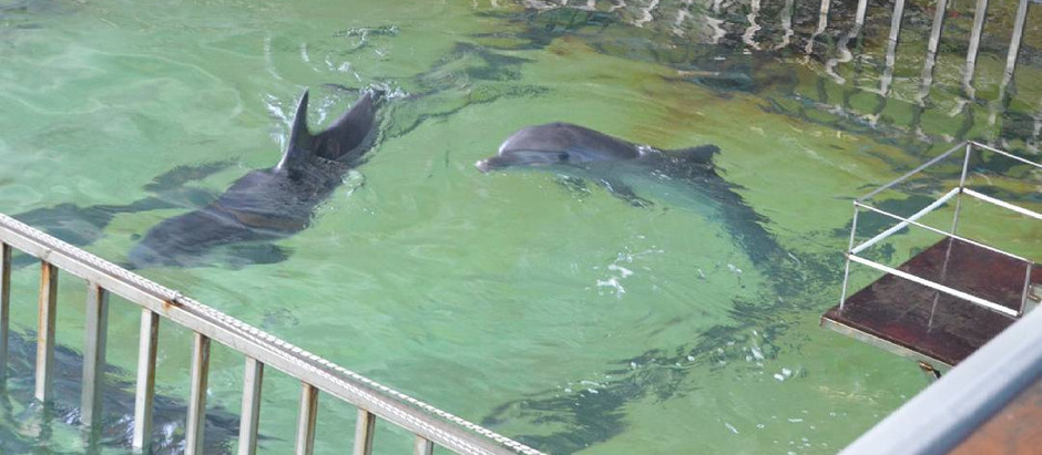 Russian Dolphinariums 101: Dolphinarium St. Petersburg