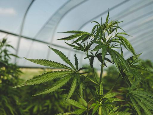 全球大麻產業市場:2020年的趨勢