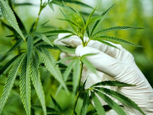 為何亞洲將成為下個大麻產業即將開拓的市場