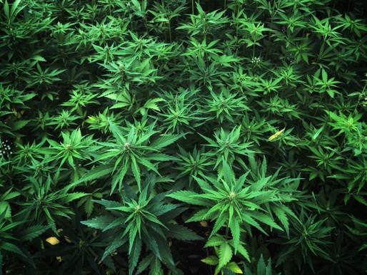 根據外媒報導,大麻電池比石墨烯更具能量