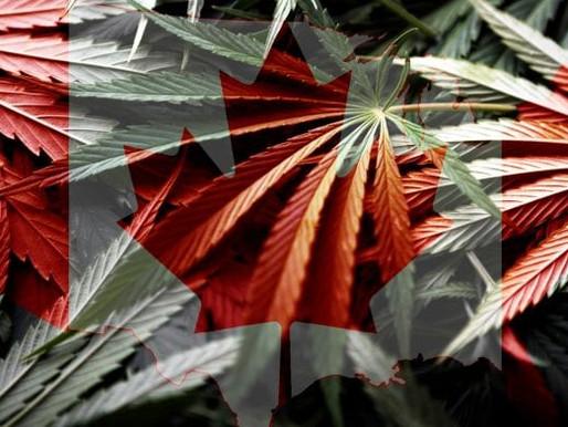 加拿大衛生部組成委員會研究大麻