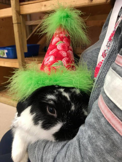 Oreo's first birthday party