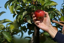 applepicked-b95f04258aa0b516.jpg