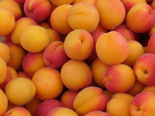 Apricot U-Pick