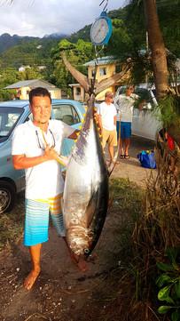 70KG Yellowfin Tuna