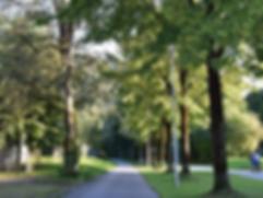 1000_bäume.png