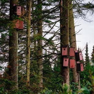 Birdhouses off the 7th fairway
