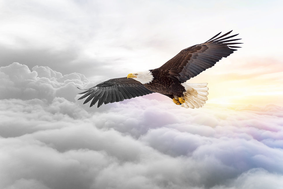 Eagle_Soaring_Above_Clouds_1.jpg