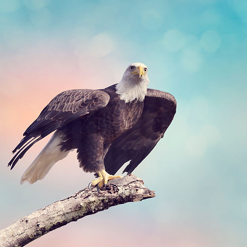 55110069_m_Eagle.jpg