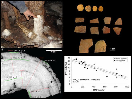 ²³⁰Th/U dating of a cave carbonate from northern India that formed in the late 20th and early 21st centuries allows comparison of oxygen isotopes from the carbonate with instrumental observations, helping to calibrate ancient carbonate records of the Indian summer monsoon.  (Right) Nitrogen isotopes of ratite (ostrich, emu) eggshells from archaeological sites in Africa, the Near East, and Australia can provide onsite paleo-precipitation records.