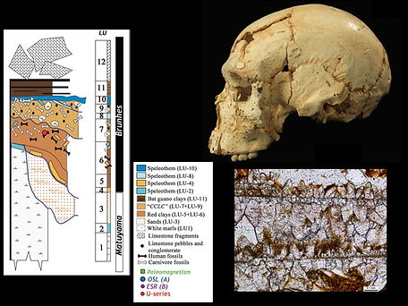²³⁰Th/U dating of a carbonate concretion (lower right) attached to a skull from Sima de los Huesos (Spain) provides an age of 430,000 years for early ancestors of the Neanderthals.