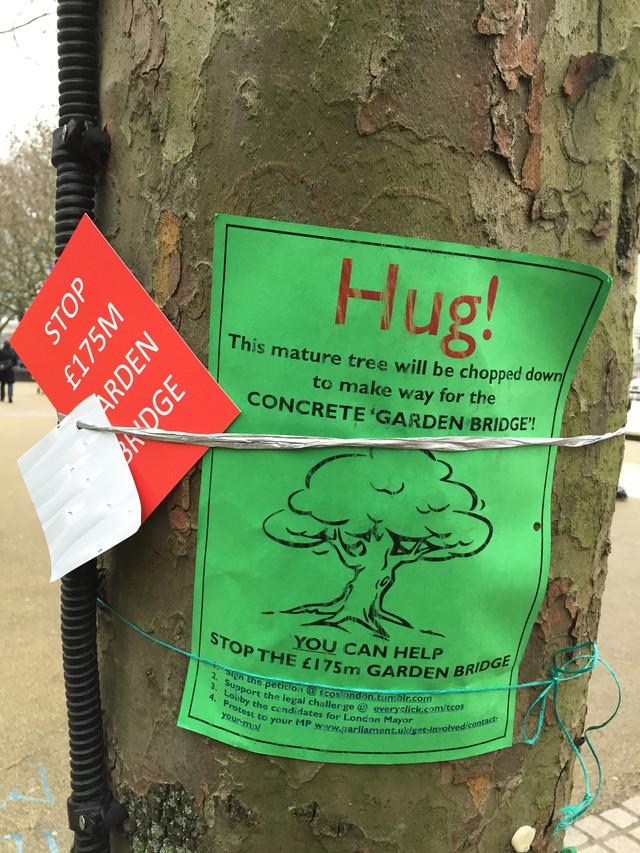 Hug a condemned tree on South Bank!