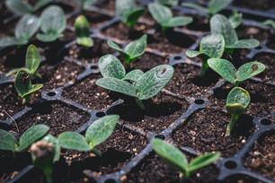 Seeding for Fall