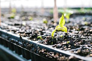 Summer Crops Galore & Weeding the Vineyard