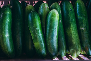 Harvesting Cucumbers & Experimenting with Beneficial Nematodes