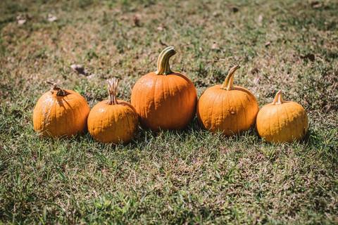 October 16th Farmers Market