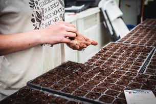 Seeding Peppers & Harvesting Radishes