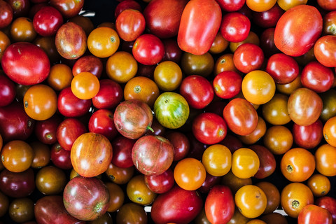 Harvesting Tomatoes and Planting Melons