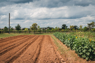 Implementing a New Cropping System and Planting Fall Crops