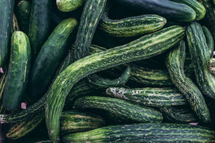 Harvesting Cucumbers & Experimenting with Luffa