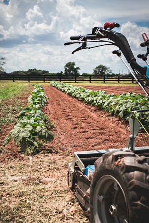 New Tools & Summer II Planting Continues