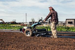 Planting Tomatoes & Hardening off Transplants