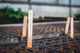 Practicing Adaptability & Seeding Tomatoes