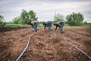 Adding More Beds & Seeding Corn