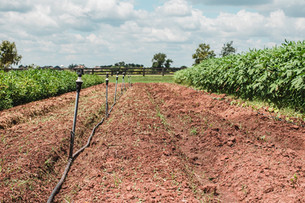 Planting the Last Succession of Summer Crops
