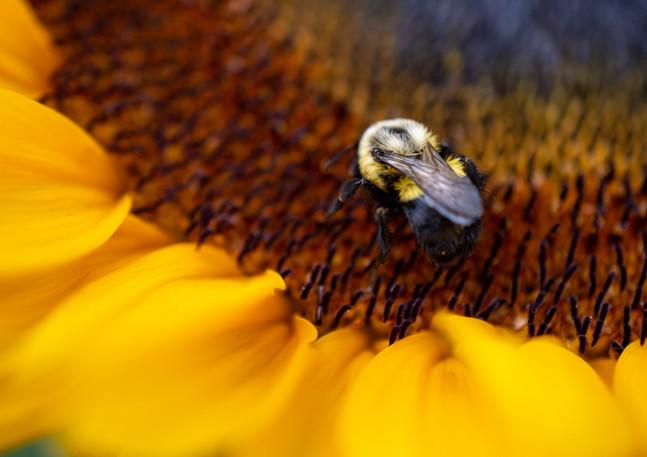 sunflowerswithabby-40.jpg