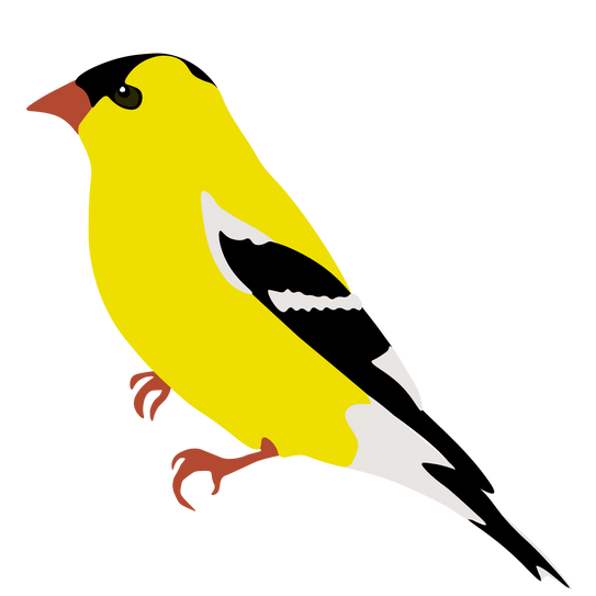 american goldfinch-03.png