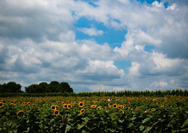 sunflowerswithabby-19.jpg