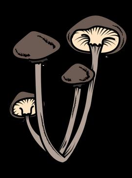 mushrooms-03.png