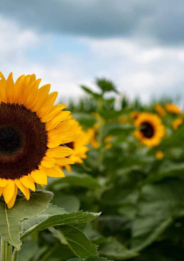 sunflowerswithabby-06.jpg
