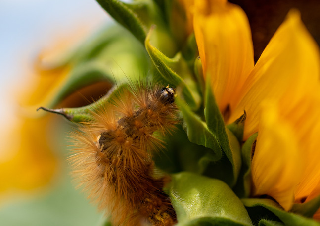 sunflowerswithabby-10.jpg