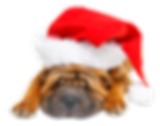 holiday dog.png