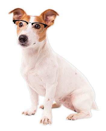 dog with glasses.png