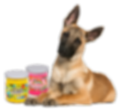 Dog, Pet Odor Exterminator Candles, Lollipets, Happy Days, pet odor, dog odor, Specialty Pet Products