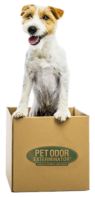 dog in box 0520.png