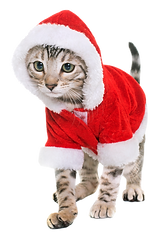 holiday cat.png