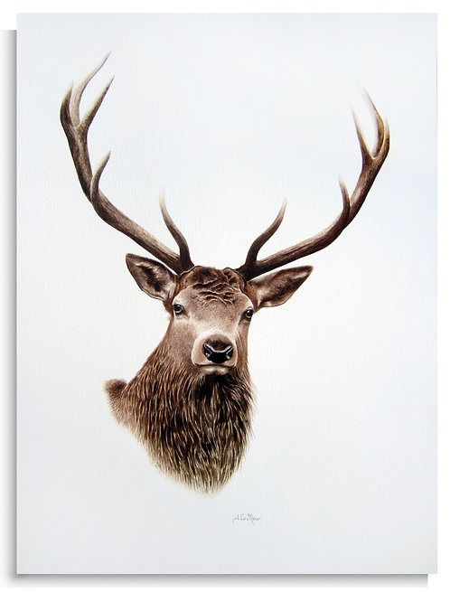 REPRODUCTION CERF