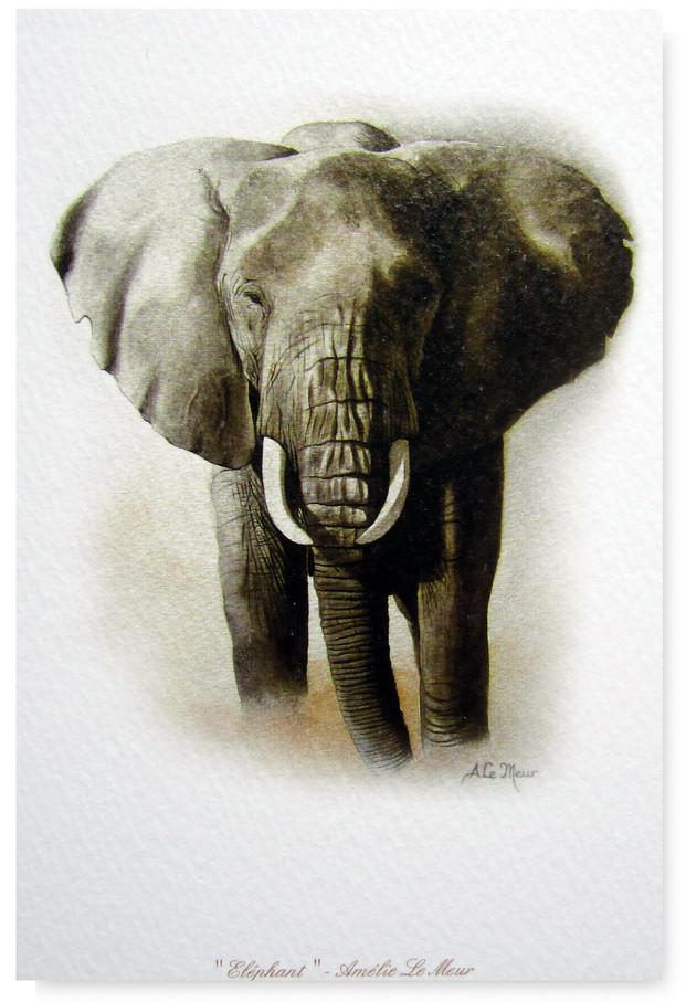 CARTE ELEPHANT