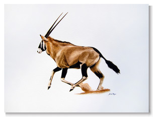 REPRODUCTION ORYX