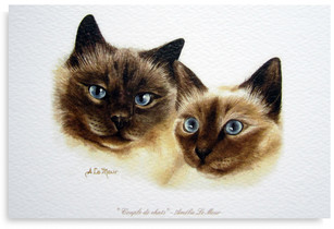CARTE CHATS